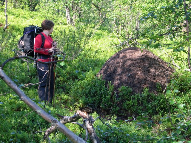 Ant Mounds, Sweden's Tree Line, Blue Butterflies,  Sámi Villages, Etc.