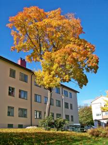 Fall scene in neighboring Traneberg
